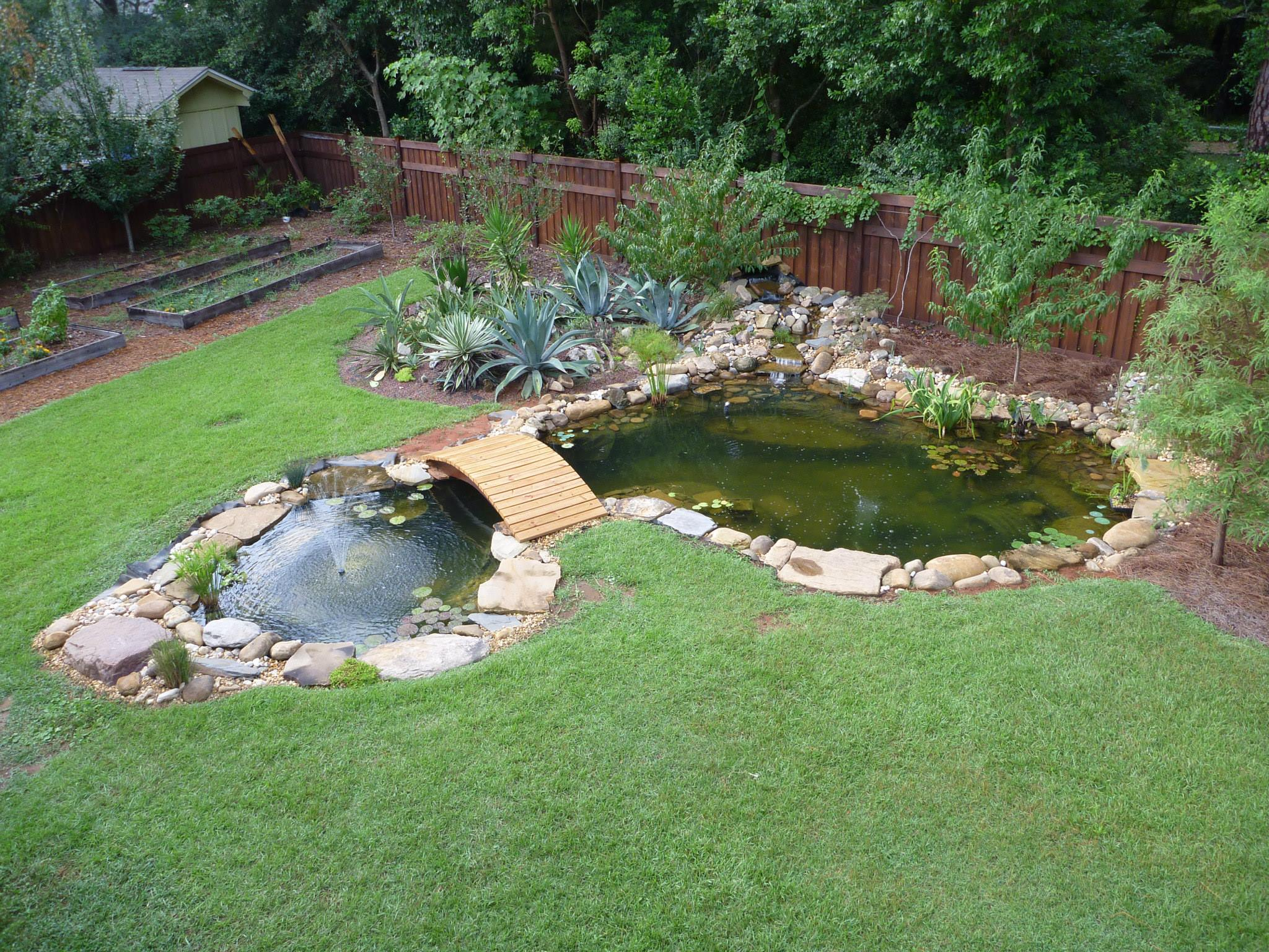 Welcome to my blog home raised aquatics plants for Small pond construction